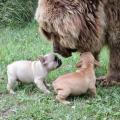 Un ours!!!