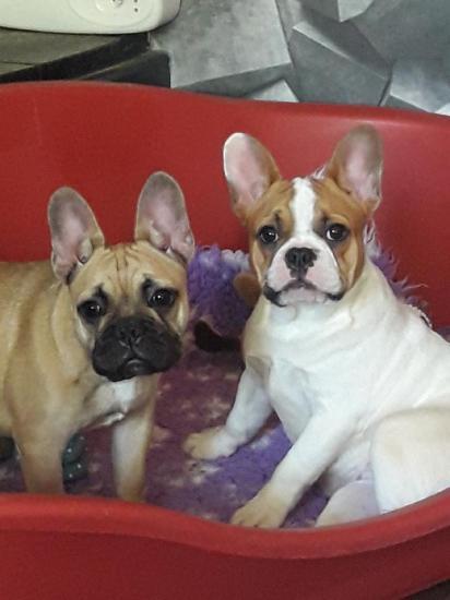 Oups (I Miss You et Locky) et Onyx (Lexie et Loki)