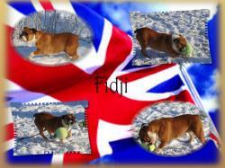 Fidji fond 2