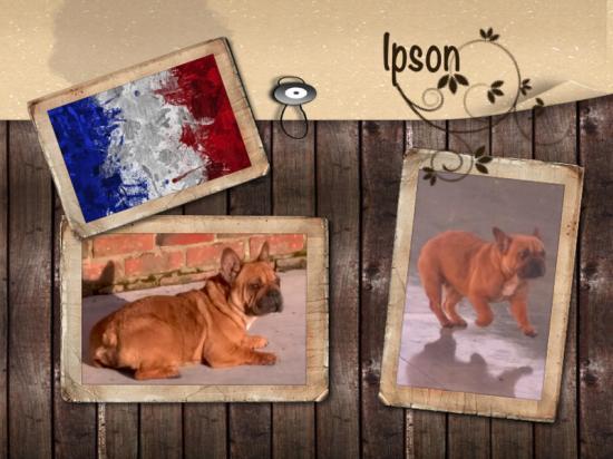 Ipson 1