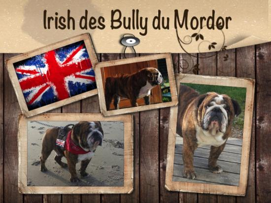 Irish des bully du mordor