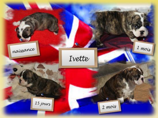 Ivette 2