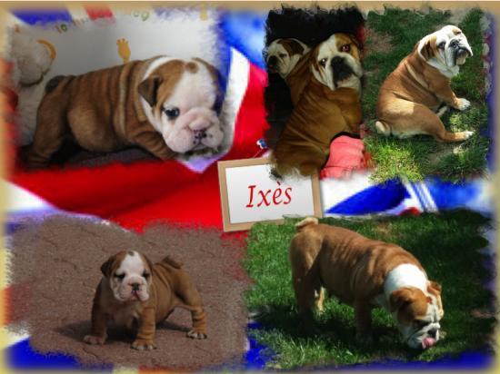 Ixes 1