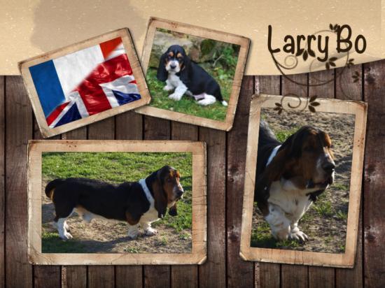 Larry bo