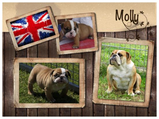 Molly 1