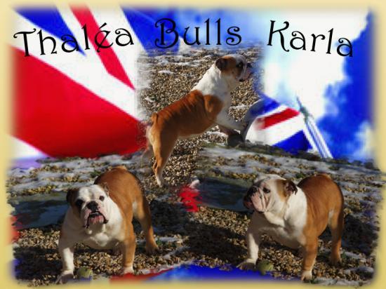 thalea-bulls-karla.jpg