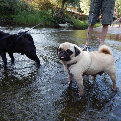 Carla et Homer à la rivière