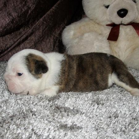 Ralph - 3 semaines
