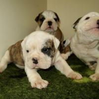 Nala, Ruby et Ralph
