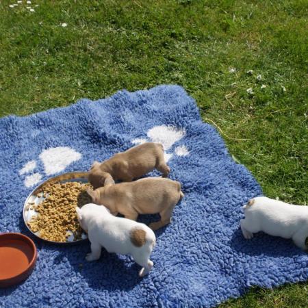 Repas de famille au soleil