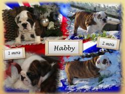 Habby 1