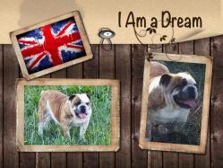 I am a dream 1