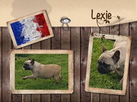 Lexie 1