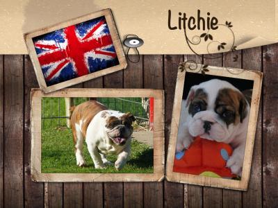 Litchie 1