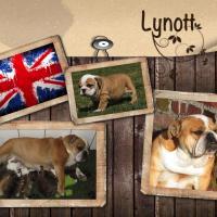Lynott