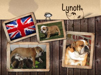 Lynot