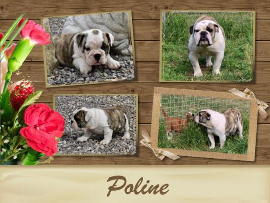 Poline